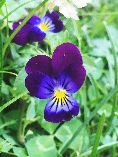 Flower Purple Growth Petal Beauty In Nature Nature Fragility Plant Flower Head No People Freshness Day Outdoors Focus On Foreground Blooming