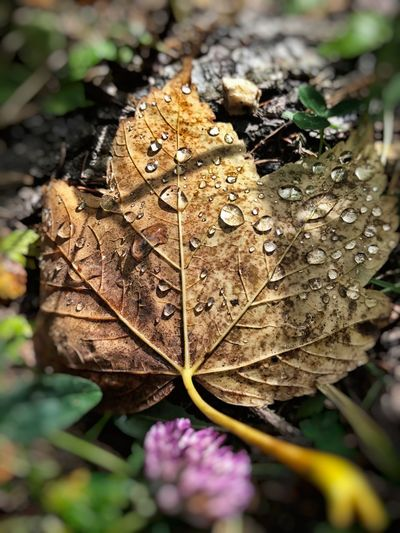 Autumn 🍁 Leaf Waterdrops Beauty In Nature Fragility Close-up My Point Of View Capture The Moment EyeEm Gallery EyeEm Best Shots Eye4photography  Taking Photos Enjoying Life Excursion Perspectives On Nature