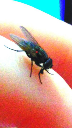 Musca Fly Hanging Out Taking Photos Check This Out Enjoying Life Hanging Out Animal