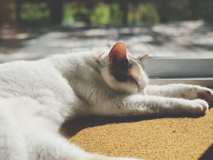The Week on EyeEm Animal Themes Animal Pets One Animal Domestic Animals Domestic Cat Domestic Cat Relaxation Day Feline Close-up Resting Lying Down Sunlight Indoors  No People Focus On Foreground