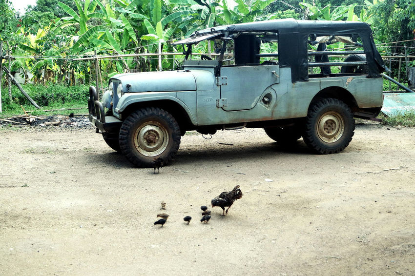Animal Themes Animals Car Close-up Day Land Vehicle No People Outdoors Outside Thailand Transportation