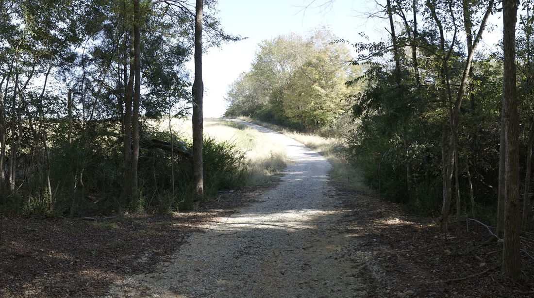 Dirt road in the forest in Florence Alabama Autumn Collection Autumn Colors Fall Colors Halloween Halloween_Collection Pumpkins Autumn Colours Decorations 🎭 Halloweenparty Outdoors Pumpkin