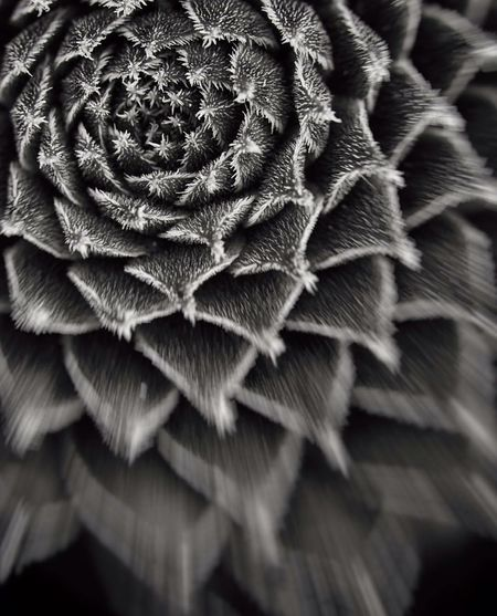 ...and the Beast 🌵 Close-up Macro Nature Cactus Bnw Blackandwhite Focus On Foreground Selective Focus From My Point Of View Minimalism Macro Photography Light And Shadow Studio Shot EyeEm Nature Lover Eye4photography  Scenics Abstract Concentric Myuniverse Light And Darkness  Magic Moments Macro Freshness Turn Your Lights Down Low No People Mystery