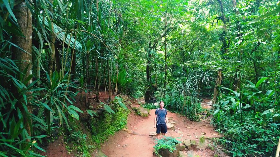 Walking Tree Growth Green Color Full Length Real People Nature Lush Foliage Outdoors Day One Person Plant People Standing Men Beauty In Nature Adult One Man Only Jungle Jungle Trekking Path Thailand Adventure Hiking Hikingadventures