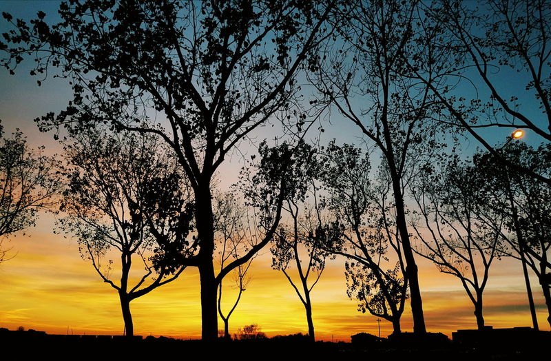 Tree Silhouette Sunset Sky Nature Tranquility Beauty In Nature Outdoors No People Scenics Day Aveiro, Portugal University Campus Full Frame Samsung Galaxy S8 Perspective Photography Photography Illuminated High Angle View Cityscape Aveirolovers Relaxing Close-up Backgrounds Beauty In Nature