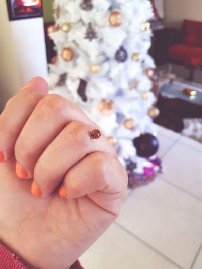 mariquita Insect Mariquita♥ Naranja Navidad Xmas Human Body Part Human Hand One Person People Indoors  Adult Close-up