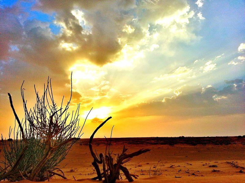 Herb Desert Desert Desert Plants Sands Sun Sunrise Cloud Clouds And Sun Sunset Plants Suny Nature Sands And Sky Sands And Plants Sky Cloud - Sky Outdoors No People Day Beauty In Nature Sunlight شروق نبات نباتات برية غروب طبيعة سحاب The Great Outdoors - 2017 EyeEm Awards