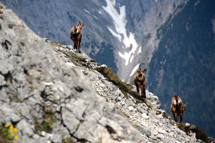Low angle view of goats on mountain