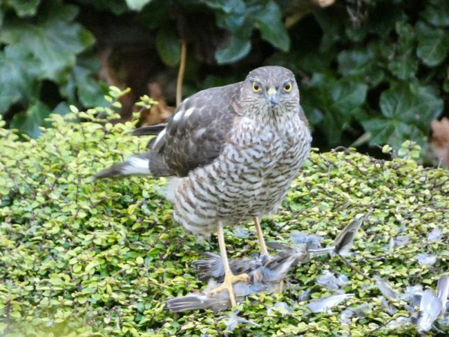 Nature at work in the garden ... Bird Animal Themes One Animal Animals In The Wild Animal Wildlife Day Bird Of Prey