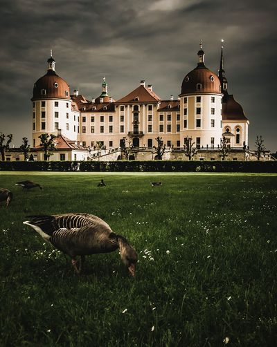 Castle Moritzburg History Germany Deutschland Goose Castle Castle View  Castles View Focus Moritzburg  Schloss Schloss Moritzburg EyeEm Best Shots EyeEm Nature Lover EyeEm Selects EyeEm Gallery Eye4photography  EyeEmBestPics EyeEm Best Edits EyeEm Masterclass Saxony Sachsen Historic Building Historic Historical Building Historical Place Politics And Government Architecture Building Exterior Built Structure