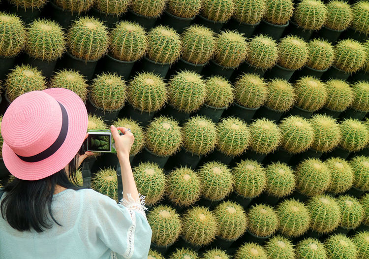 Rear view of woman photographing cactus plants