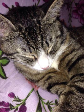 she is my little kitten 🐱 Leila❤️❤️❤️ Sleeping