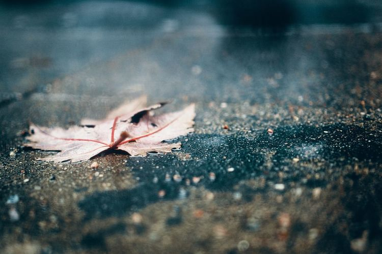 still around… EyeEm Selects Leaf Autumn Change Dry Weather Selective Focus Maple Leaf Close-up No People Fallen Wet Outdoors