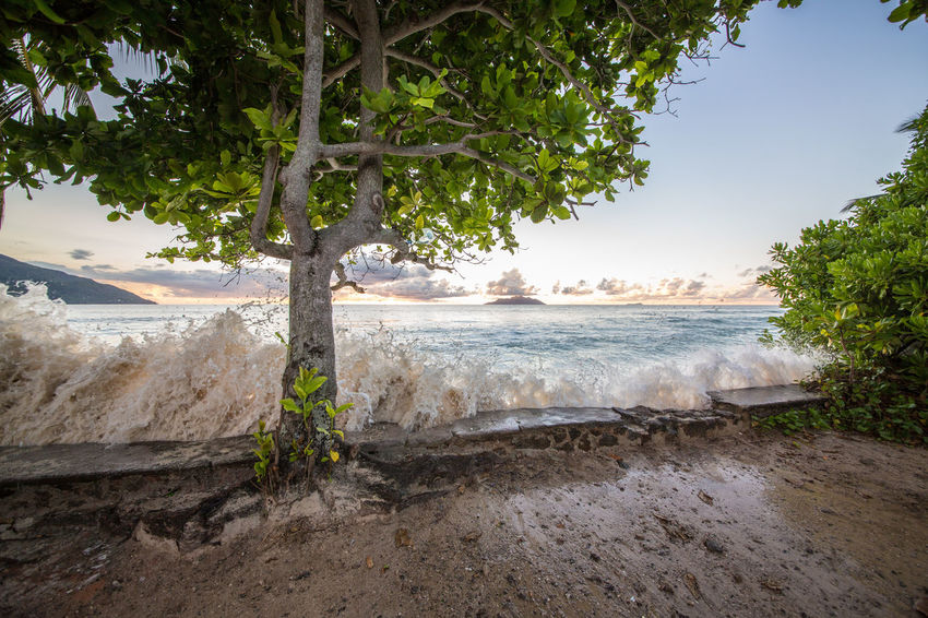 La Digue Anse Lazio Anse Source D'argent Beach Beauty In Nature Day Landscape Mahé Nature No People Outdoors Praslin Seychelles Sand Scenics Sea Travel Destinations Tree Vacations Water Wave