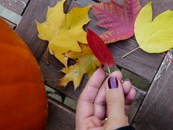Autumn Change Close-up Holding Human Body Part Human Hand Leaf Maple Leaf One Person Outdoors Pumkin Real People Seaon Thanksgiving