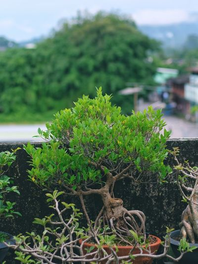 Close-up of plant against trees