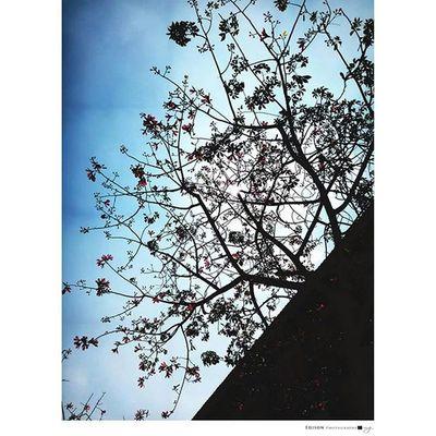 【 秋分 】 早晚涼意 帶出冬季的氣息 撒出夏末的嘆息 我愛夏天。 手機攝影 G4 Tree 365Snap