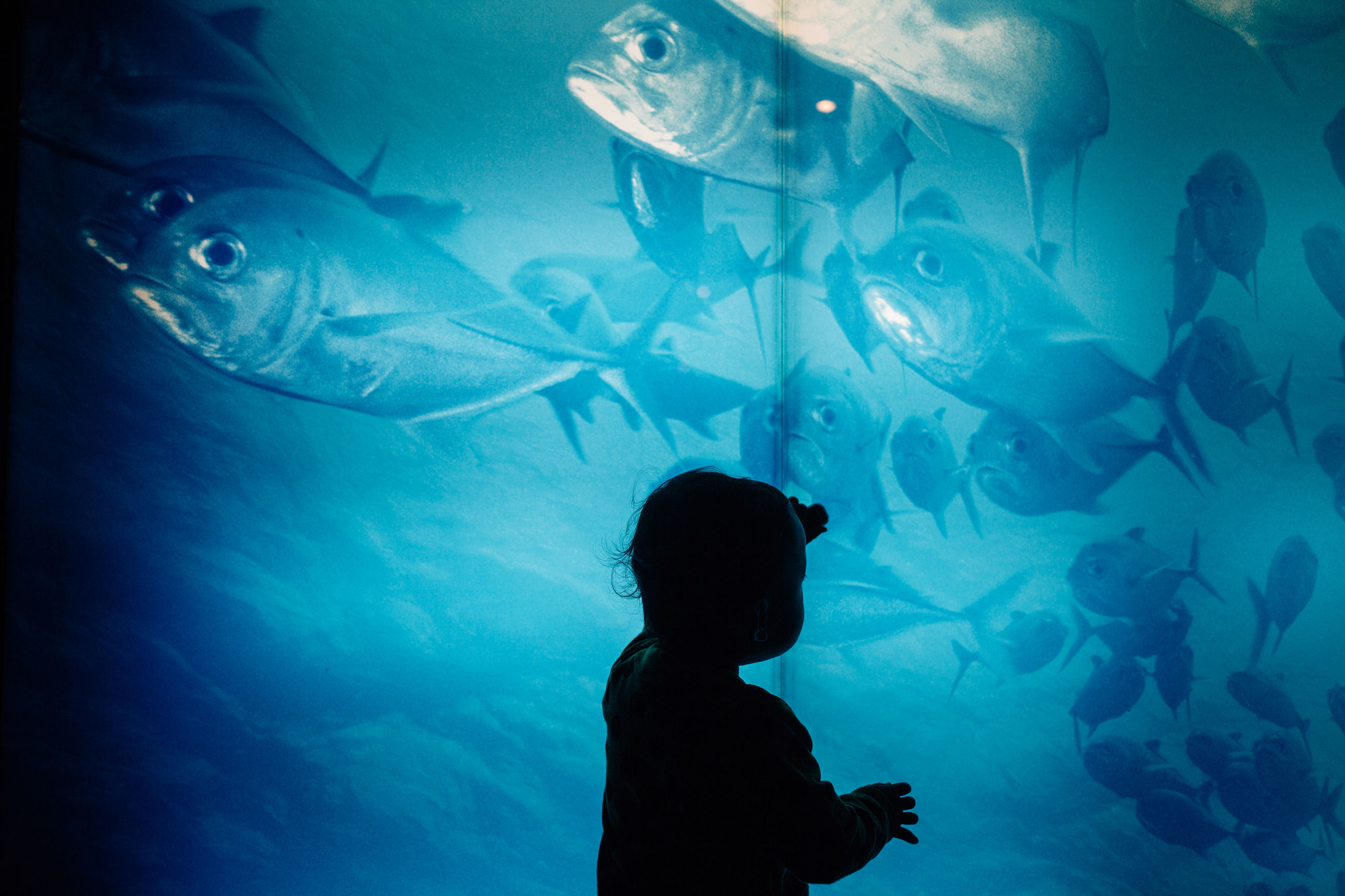 fish, aquarium, underwater, animal themes, sea life, silhouette, swimming, sea, one person, people, large group of animals, water, indoors, nature, adult, undersea, adults only, day