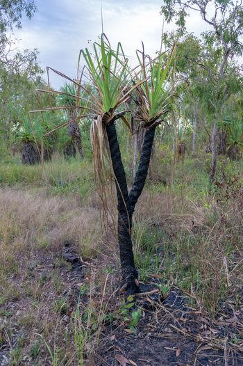 Tree Trunk Fire