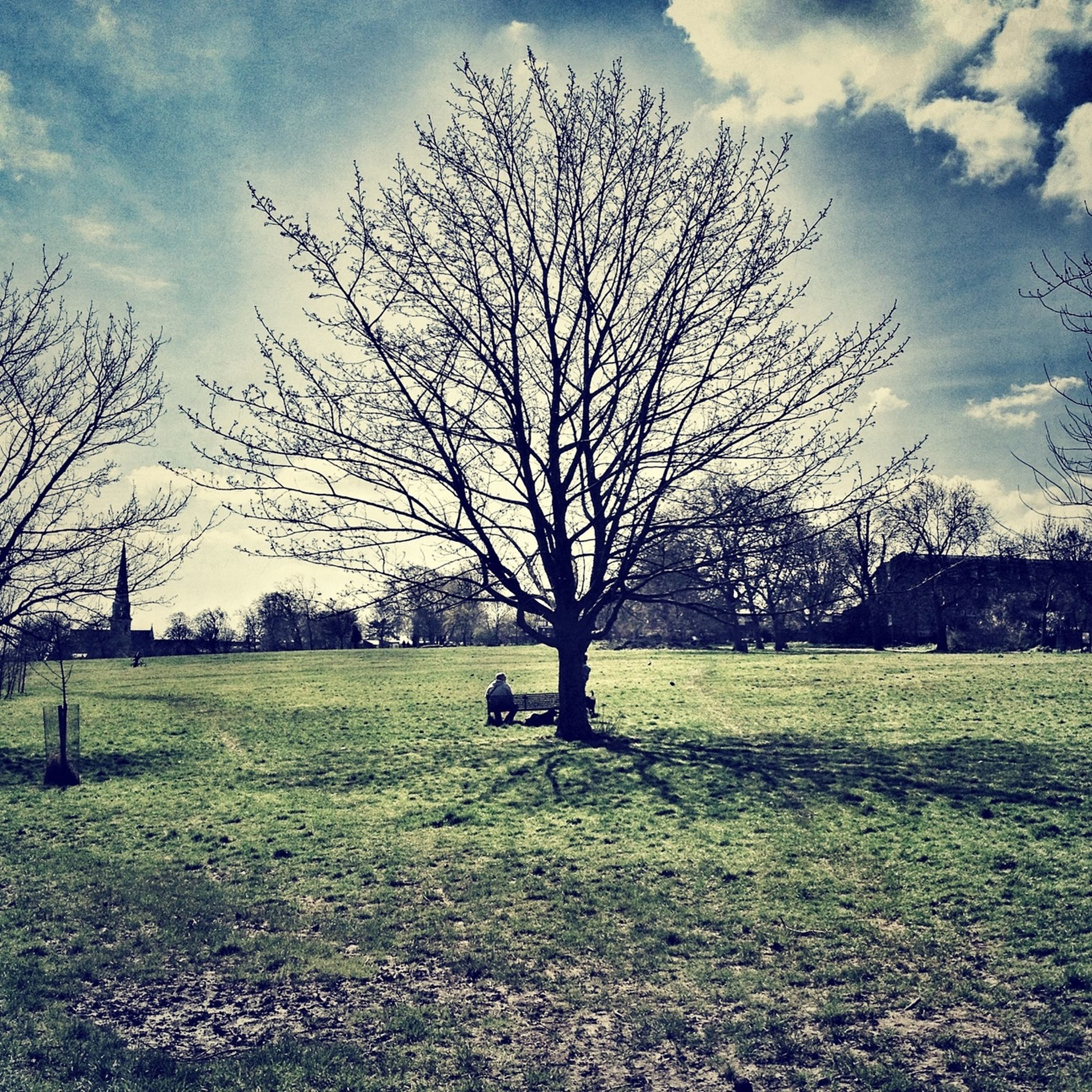 grass, tree, bare tree, sky, field, tranquility, branch, landscape, tranquil scene, grassy, cloud - sky, nature, cloud, beauty in nature, scenics, tree trunk, growth, shadow, day, park - man made space