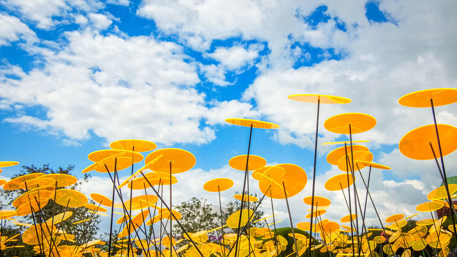 Low angle view of yellow flowering plants on field against sky