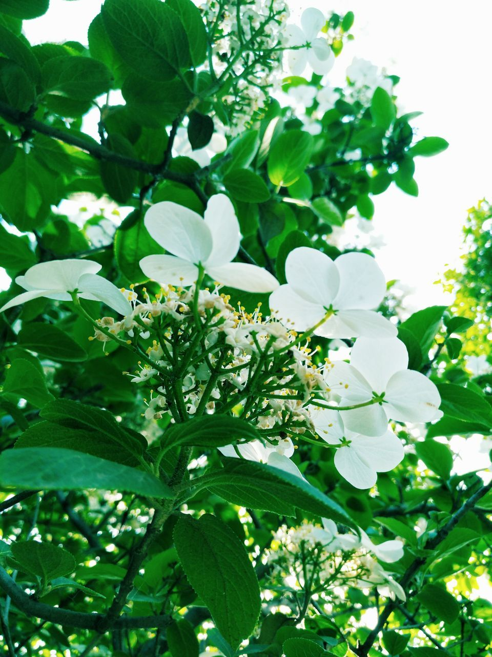 growth, flower, white color, fragility, leaf, nature, beauty in nature, freshness, petal, plant, no people, green color, tree, day, outdoors, springtime, branch, blooming, close-up, flower head