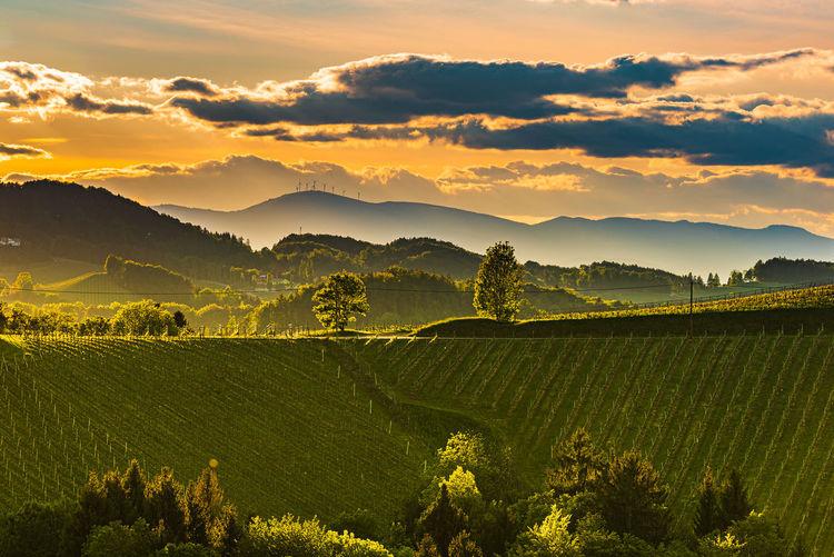 South styria vineyards landscape, near gamlitz, austria, europe. grape hills view from wine road