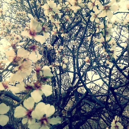 Spring Instagood Instalike Bahar bahargeldihosgeldi