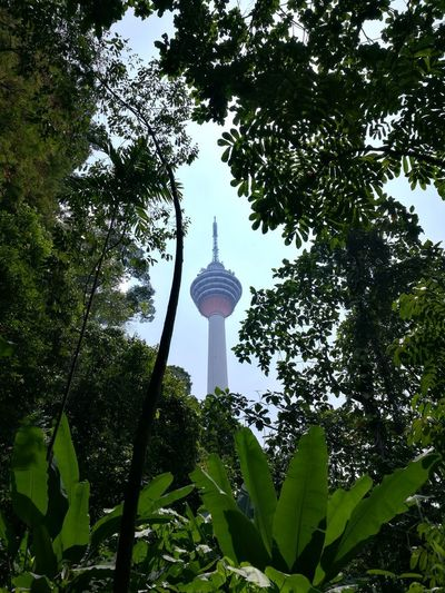 Above the green foliage stands the tower of KL. Tree Low Angle View Travel Destinations Building Exterior Nature Outdoors City No People Day Architecture Built Structure Kuala Lumpur Malaysia Malaysia Truly Asia KL TOWER Kuala Lumpur Tower Skyscraper Neighborhood Map