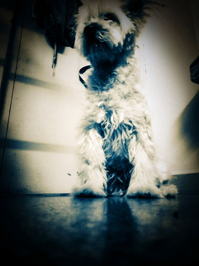 EyeEm Selects Dramatic Pets Dog Spooky