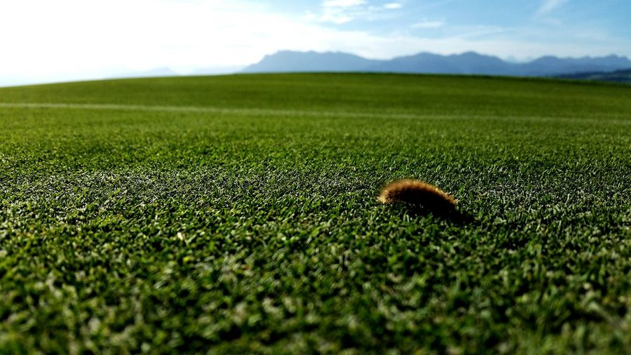 You are small in a big wold Catapiller Caterpillar Mountains Cloud - Sky Green Grass Mountains And Sky Animal Photography Animals In The Wild Mountain View Cloud