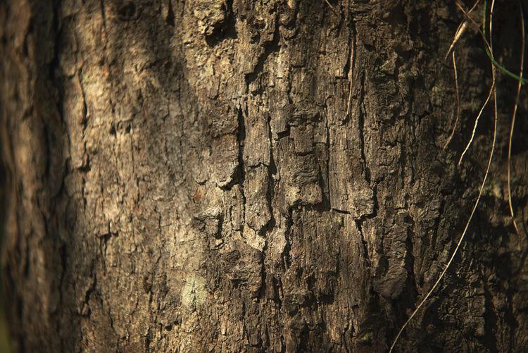 Trees Bark