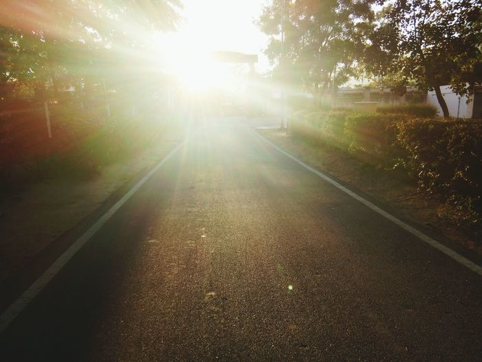 Light Falling Tree Road Sunlight Outdoors Nature The Way Forward No People Scenics Day Beauty In Nature Landscape Sky Luminosity