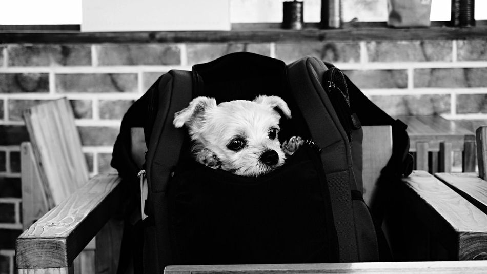 Dog Pet Dog Photography Dogstagram Dog Lover Pet Photography  Pet Love Pet Portrait Pet Portraits Puppy Bnw Black And White Monochrome Traveling With My Dog Travel With Pet Travel With Dogs Traveling With Pets The Portraitist - 2016 EyeEm Awards Market Reviewers' Top Picks Hanging Out Hang Out Monochrome Photography