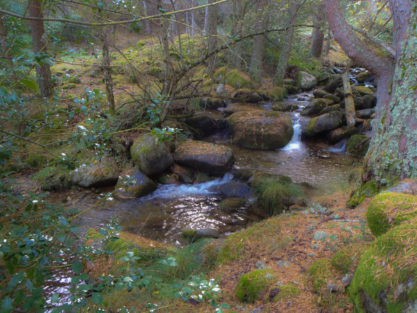 Beauty In Nature Flowing Flowing Water Forest Growth Land Nature No People Non-urban Scene Outdoors Plant Rock Scenics - Nature Stream - Flowing Water Tranquil Scene Tranquility Tree Water WoodLand
