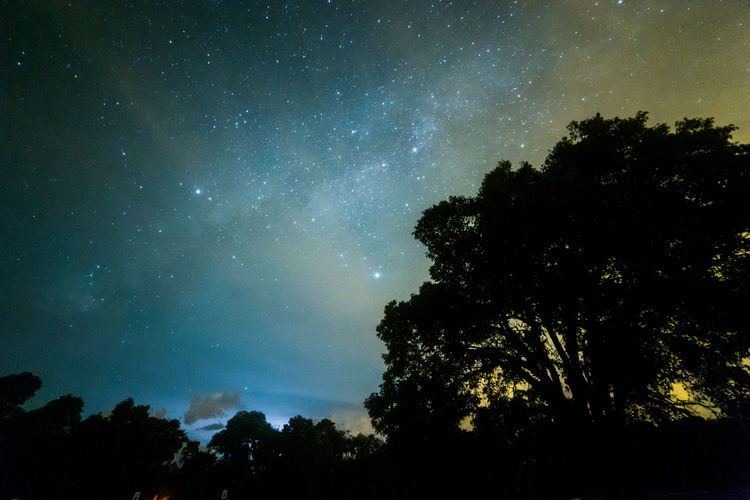 Homestead Mahogany Hammock Trail Astronomy Beauty In Nature Everglades  Galaxy Milky Way Nature Night Outdoors Scenics Silhouette Sky Space Star - Space Tranquil Scene Tranquility Tree