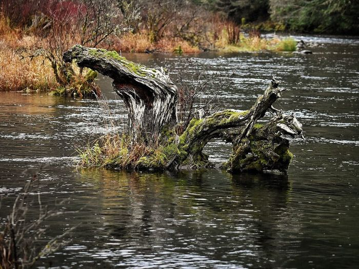 Water Nature Wood - Material Scenics Beauty In Nature Tree Outdoors Finding New Frontiers Tranquility Waterfront No People Lake Branch Growth Water_collection Outside Photography Landscape Beauty In Nature Tree Trunk Lakeshore Trees Nature Wilderness Tree River