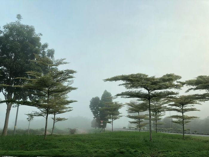 EyeEm Nature Lover Muar Johor Misty Mist Plant Tree Sky Nature Fog Beauty In Nature Growth Scenics - Nature Landscape Tranquil Scene Environment Grass