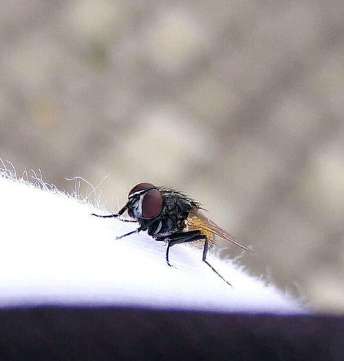 PhonePhotography Photos Around You Photography Nature Photography Insect Photography Insectstagram