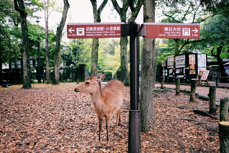 Deer Animal Animal Themes Communication Day Domestic Animals Guidance Herbivorous Information Information Sign Mammal Nature No People One Animal Outdoors Plant Road Road Sign Sign Text Tree Vertebrate Western Script