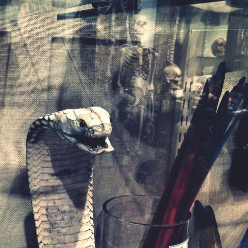 Snakes & Skullz