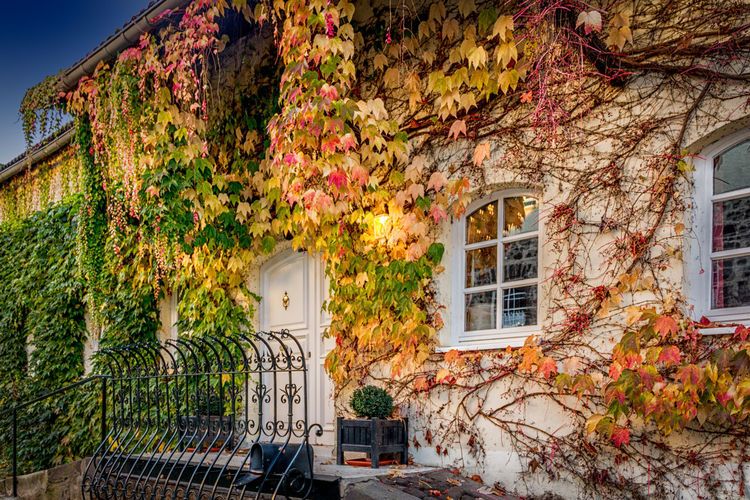 Architecture Building Exterior Built Structure No People Window Tree House Outdoors Ivy Sky Nature Day Architecture Traveling Germany Old Buildings Andernach Castle Ruin Autumn German Landscape Colors Cities_collection Photography Gut Nettehammer