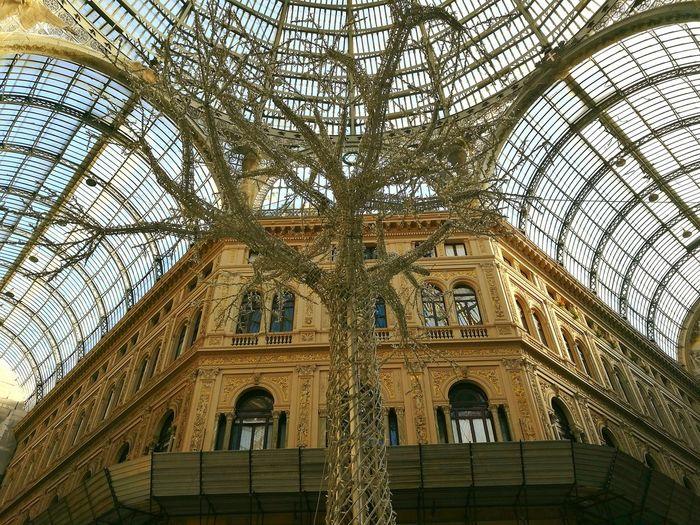 Architecture Sky Day Outdoors Naples Galleria Umberto I Sun Tree Christmas Tree Naples Tree