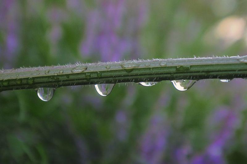 Rain drop Macro