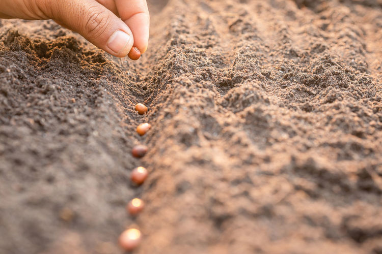 Close-up of person hand holding sand