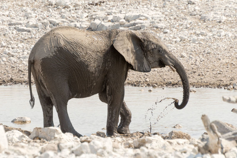 View of elephant standing by watering hole