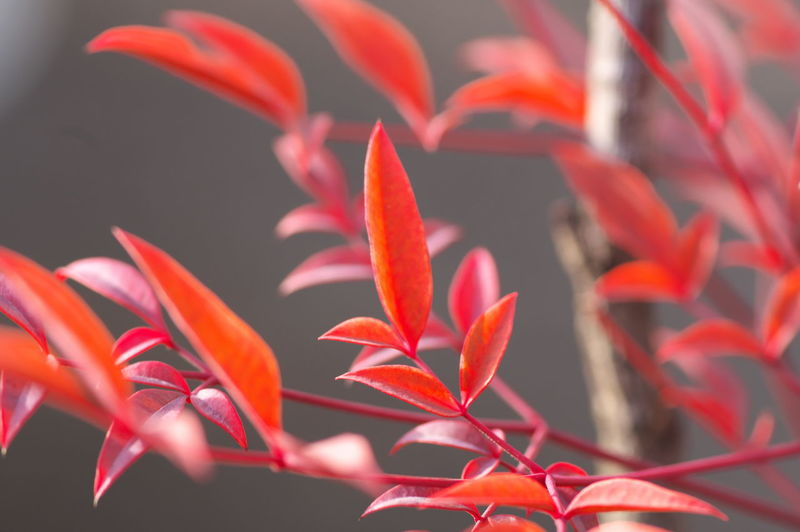 Growth Plant Beauty In Nature Close-up Vulnerability  Fragility Flowering Plant Freshness Flower Red Petal No People Orange Color Plant Part Focus On Foreground Nature Leaf Day Inflorescence Outdoors Flower Head