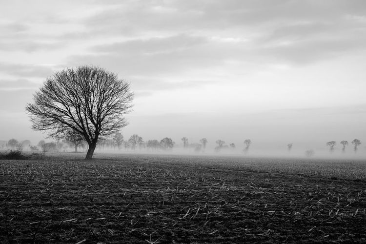Lonely bare tree in a countryside morning landscape In Black and white Bare Tree Beauty In Nature Cloud - Sky Environment Field Fog Hazy  Isolated Land Landscape Nature No People Non-urban Scene Outdoors Plant Remote Scenics - Nature Sky Solitude Tranquil Scene Tranquility Tree