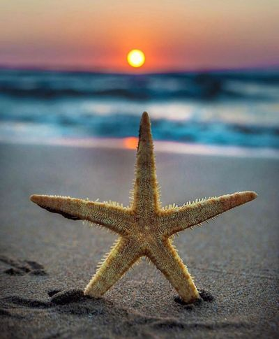 ⭐️ Starfish  Star Shape Beach Shore Water Sea Nature Beauty In Nature Colors #color #colorful #TagsForLikes #red #orange #yellow #green #blue #indigo #violet #beautiful #rainbow #rainbowcolors #colour #roygbiv #instacolor #instagood #colorgram #colores #vibrant #multicolor #multicolored #instacolorful #colorworld The Week On EyeEm