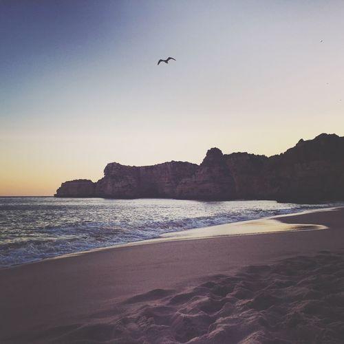 My Favorite Place Beach Portugal Algarve Praiadamarinha Alone Sunset Bird Sea Shore Water Tranquil Scene Beauty In Nature